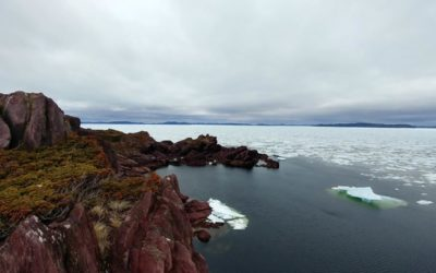 The slate rocks of Tickle Cove