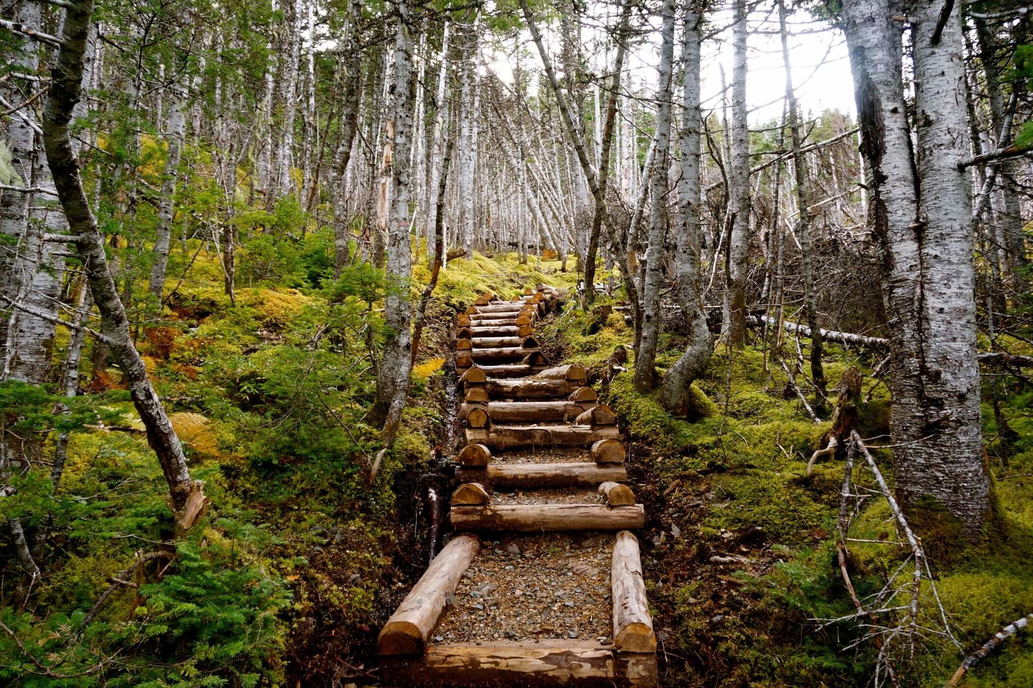 A wooden staircase leads walkers through the trees