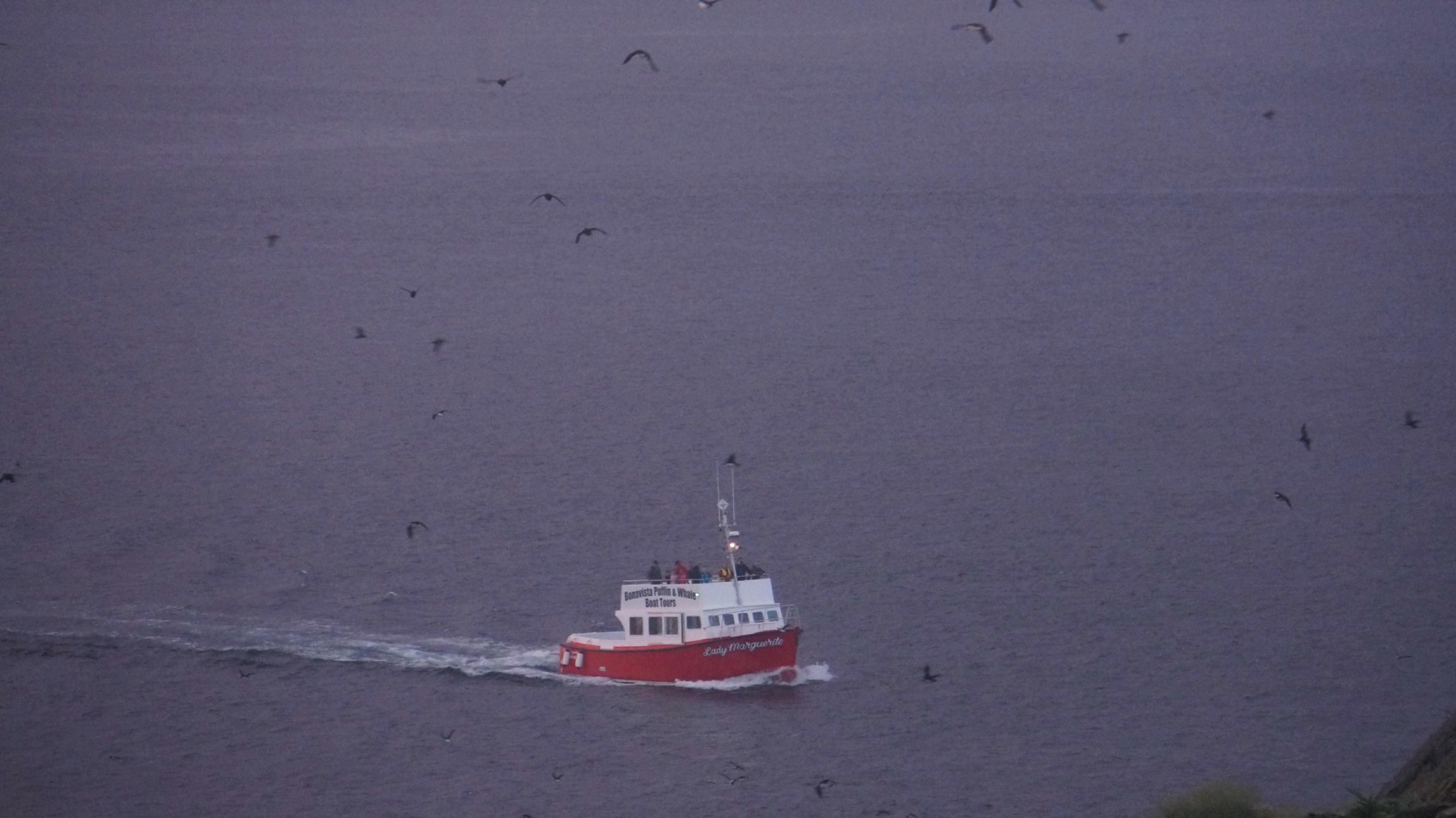 A boat tour returning at sunset to a flock of puffins