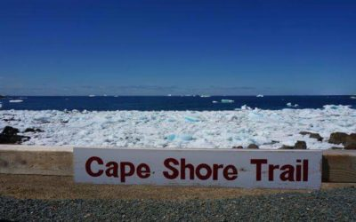 Pack ice along Cape Shore Trail